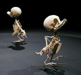 Los Esqueletos De Personajes De Dibujos Animados Se Pueden Ver En