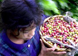производители кофе